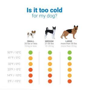 Σκύλος και χειμώνας2