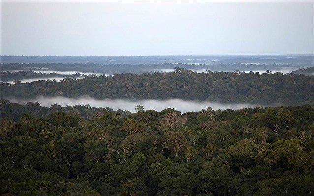 amazonios purgos brazilia tropiko dasos1